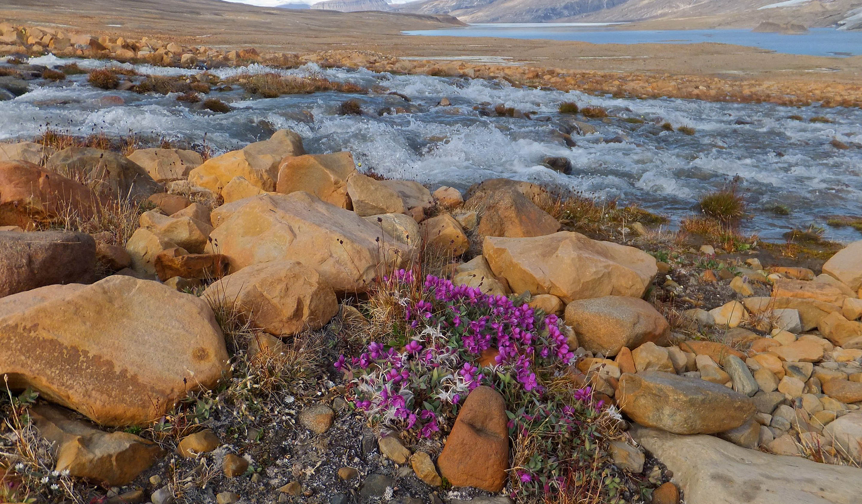 (Photo: Getty Images) River Flowers of Chukotka