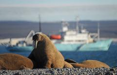 Northern Sea Route rated one of the world's top adventure cruises