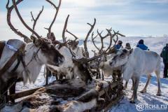Законодатели Якутии предлагают создать ТОР для развития традиционных отраслей Севера