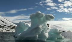 Арктический лед в августе стаял на треть больше обычного, сообщили ученые