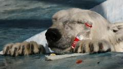 Scientists told how to protect the Russian Arctic from microplastics