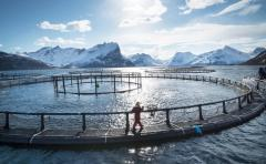 Russian-Norwegian cooperation in aquaculture