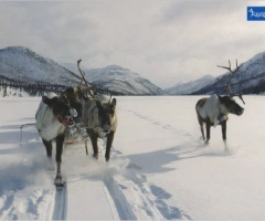 The International Annual Reindeer Crossing Through Verkhoyansk Range