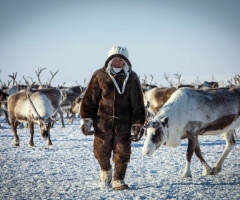 Experts to discuss perspectives of reindeer herding products processing and sales